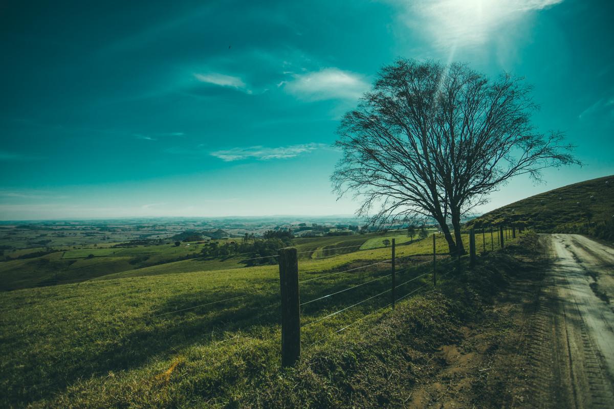 Free Images Landscape Tree Nature Grass Horizon