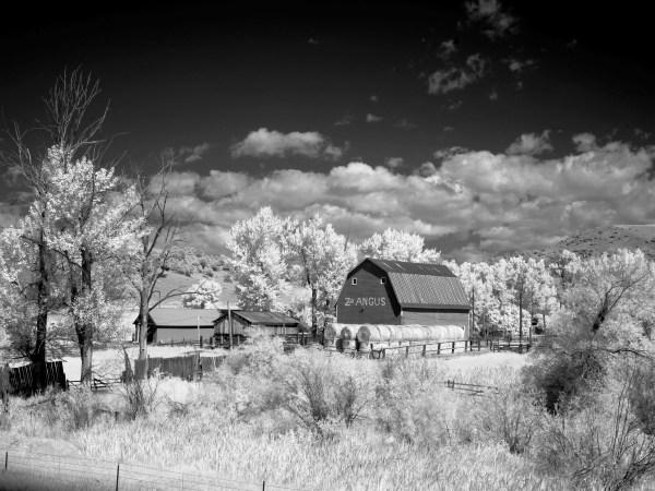Farm Landscape Black and White