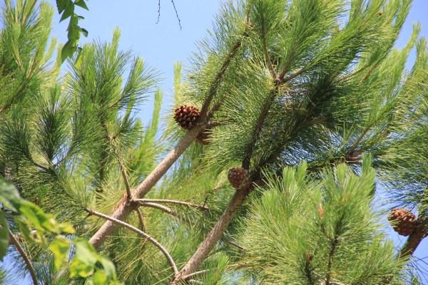 Free Nature Branch Leaf Flower Evergreen
