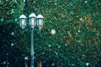 Free Images : branch, snow, winter, night, flower, green ...