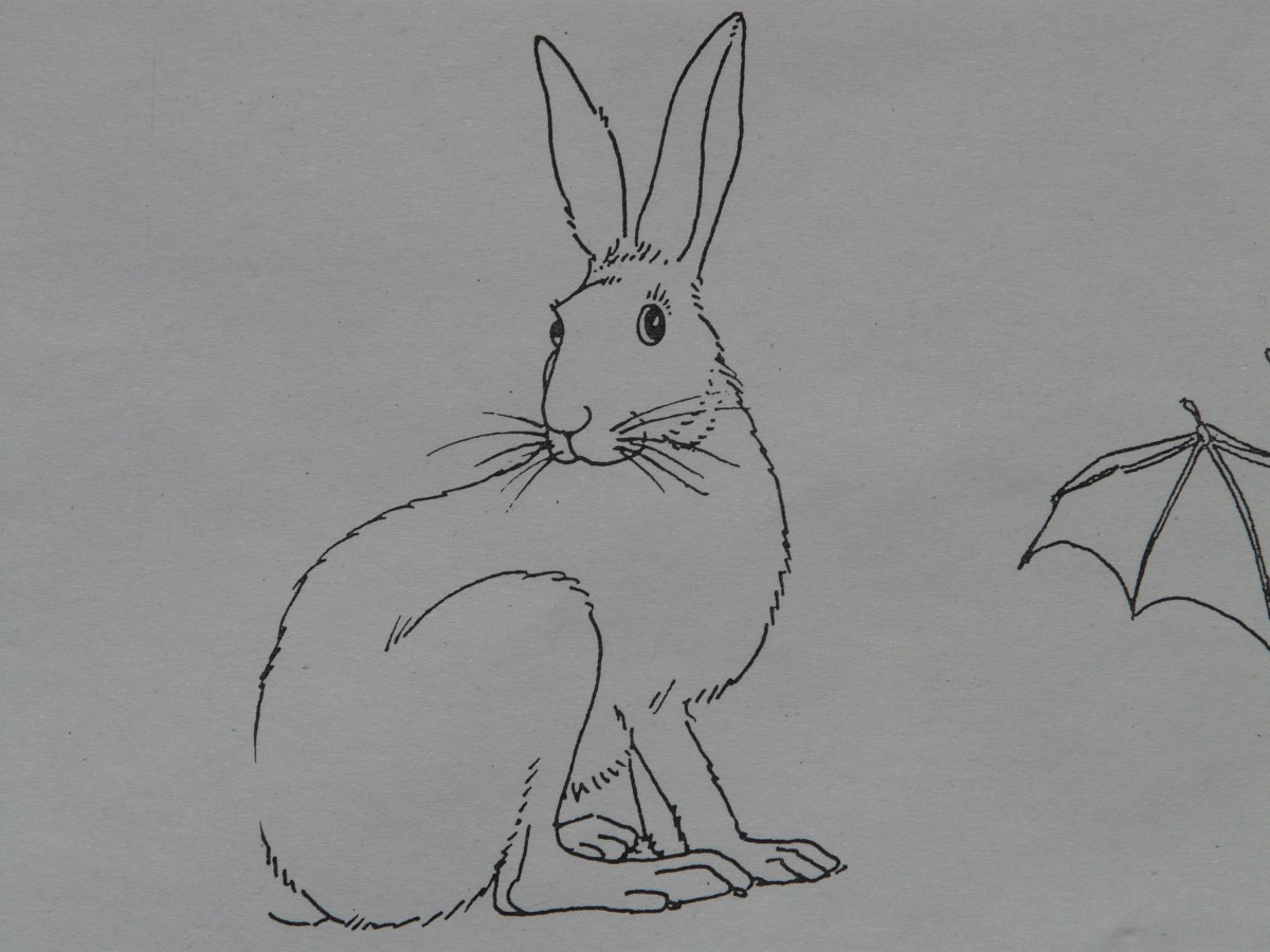 Free Images : animal, paint, rabbit, hare, sketch