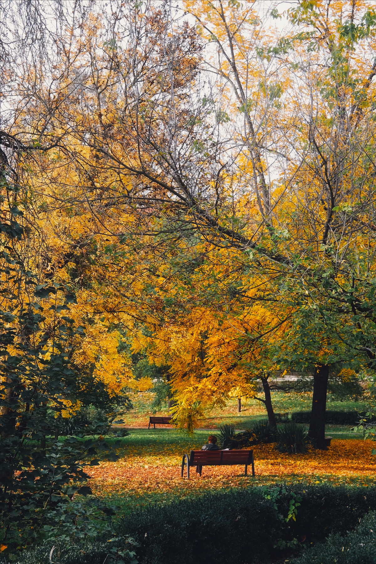 Gambar  pemandangan pohon alam cabang menanam sinar
