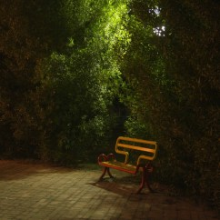 The Vacant Chair Human Jungle Skull Free Images Forest Sunlight Alone Green