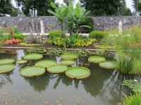 Free Images : flower, canal, walkway, pond, green ...