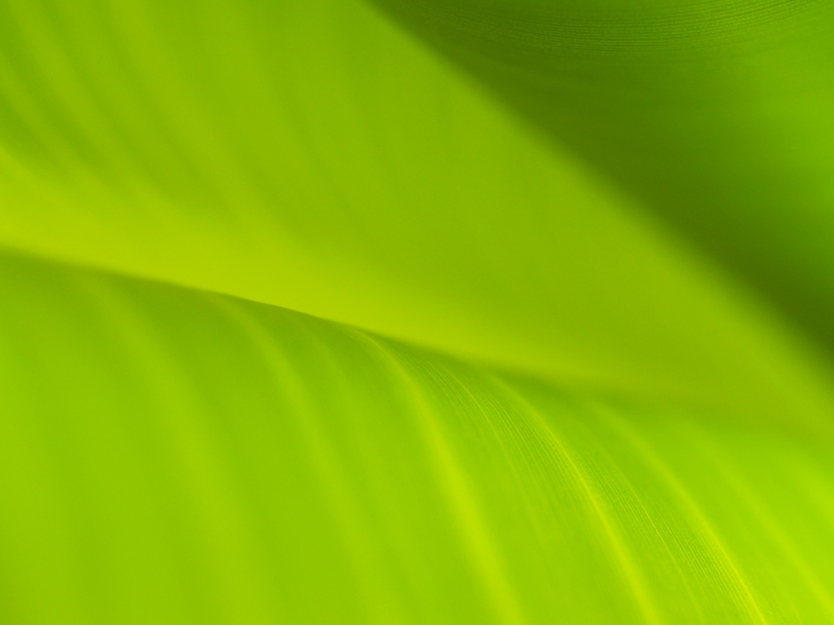 Free Images  grass drop growth sunlight leaf flower