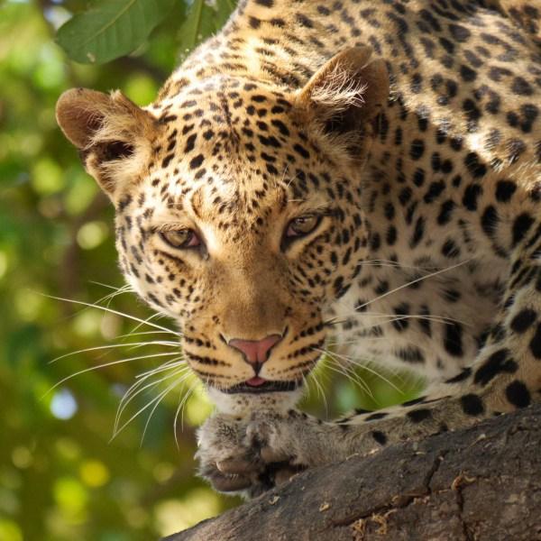 Free Fauna Close Whiskers Vertebrate