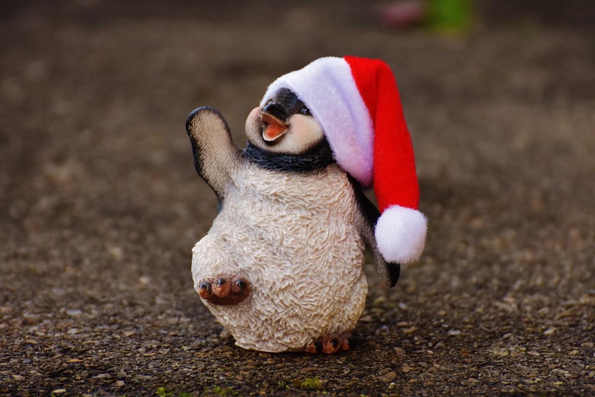 Wallpaper Danbo Cute Free Images Animal Cute Decoration Christmas Penguin