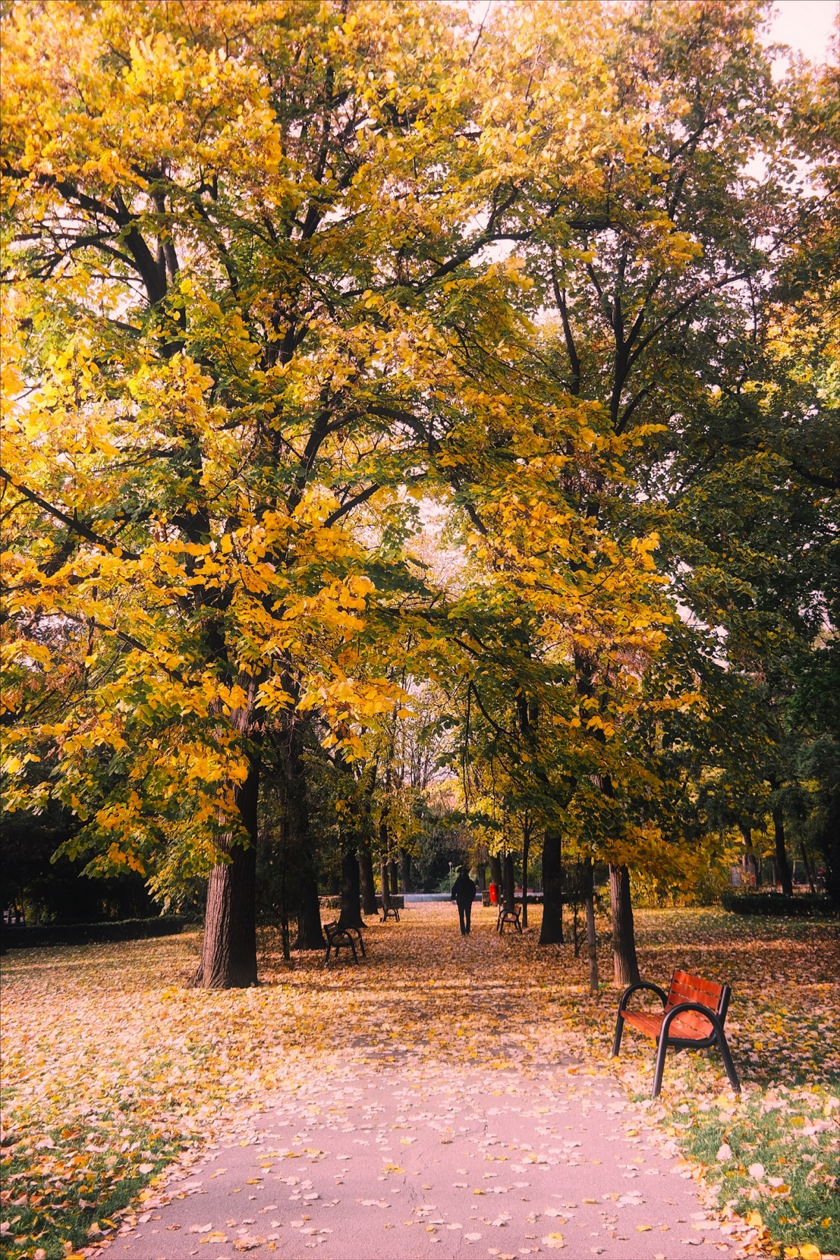 Central Park Fall Wallpaper Free Images Landscape Nature Forest Path Leaf Fall