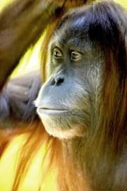 free wildlife zoo mammal