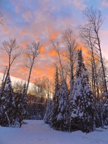 Free Tree Nature Forest Branch Snow Sky