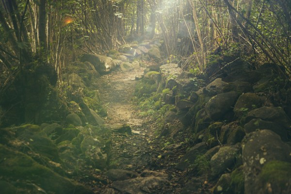Free Images landscape tree nature path wilderness