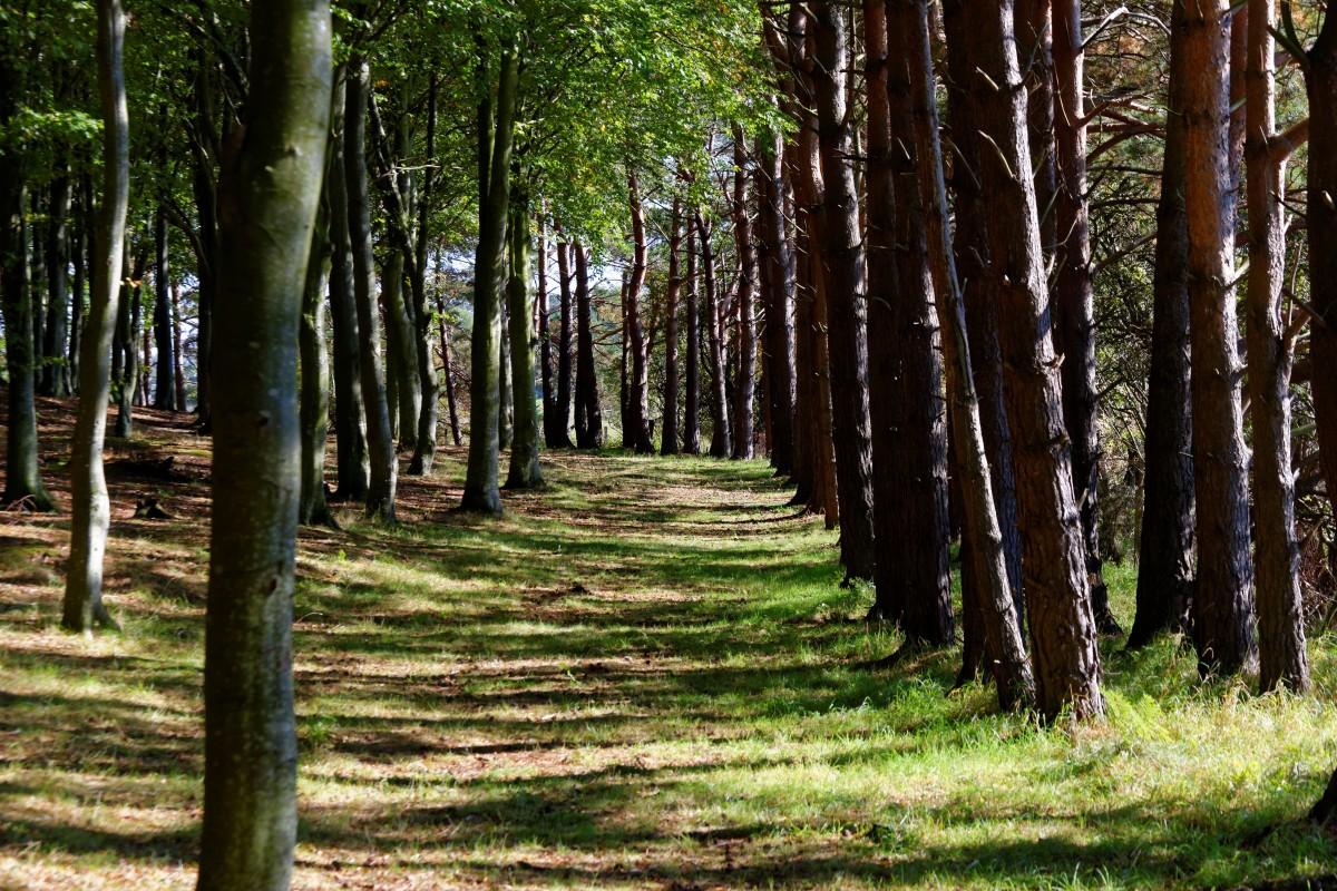 Free Images  Tree, Nature, Light, Leaf, Autumn, Season