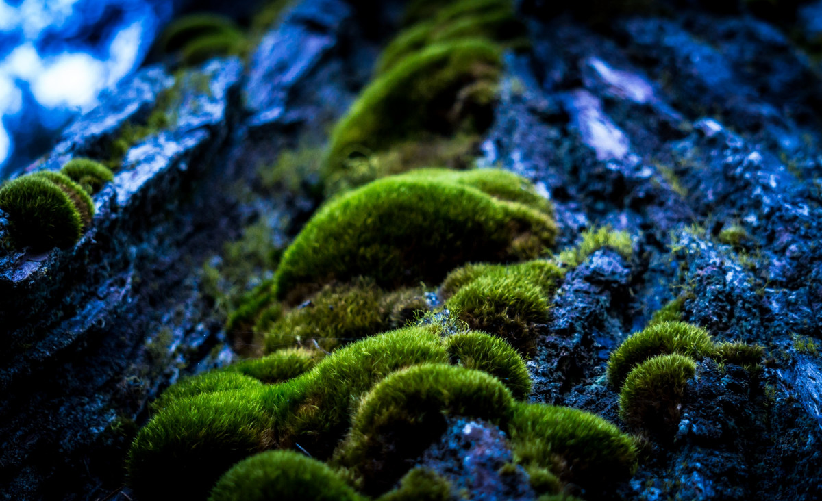Fish Wallpaper Hd Free Images Beach Water Underwater Seaweed Coral