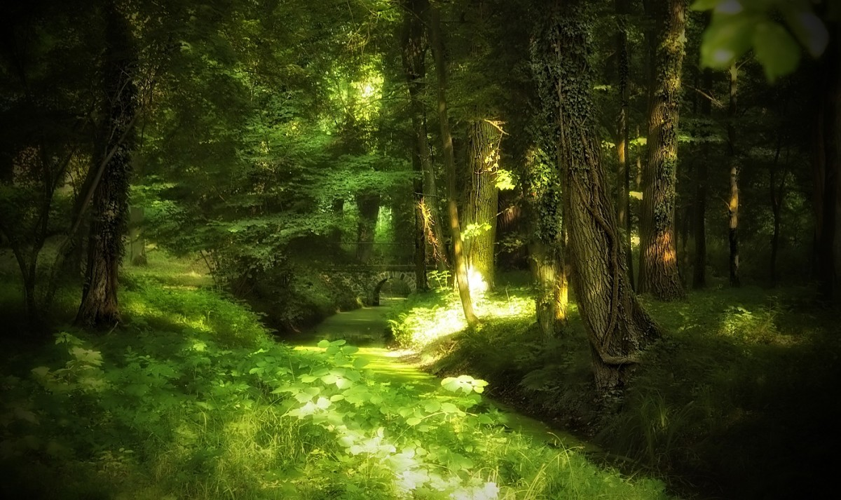 Forest Animal Wallpaper Free Images Tree Nature Forest Branch Sunlight Leaf