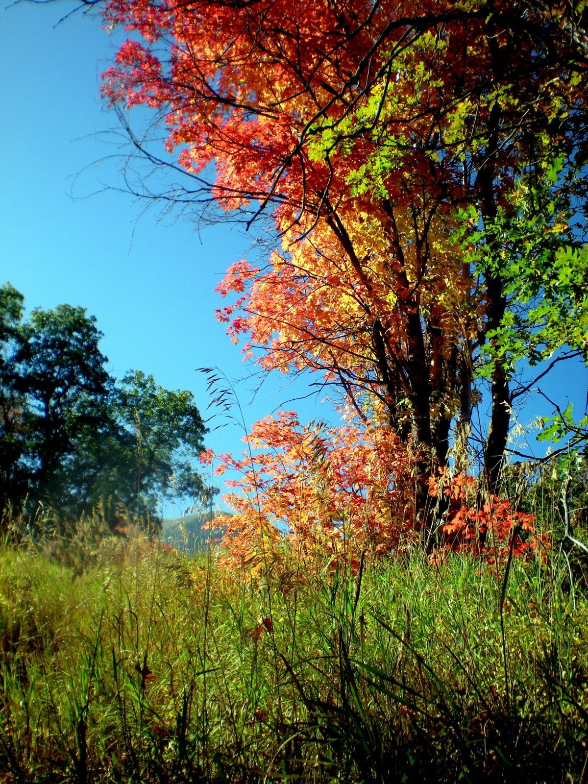 Autumn Fall Wallpaper Free Free Images Tree Nature Forest Grass Outdoor Branch