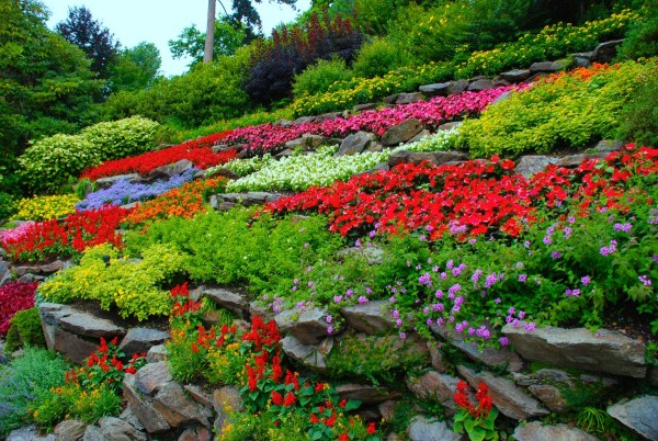 free nature blossom