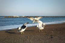 Ocean Beach Animals