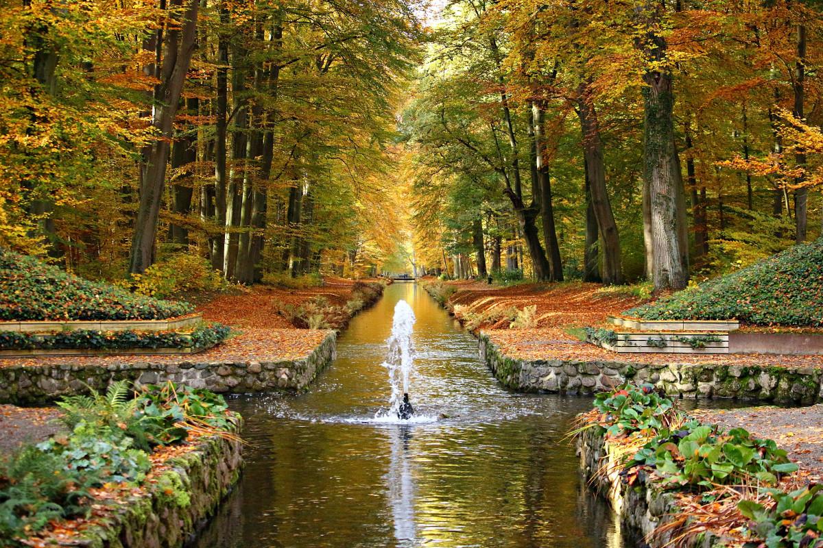 Immagini Belle  albero acqua foresta cascata luce del