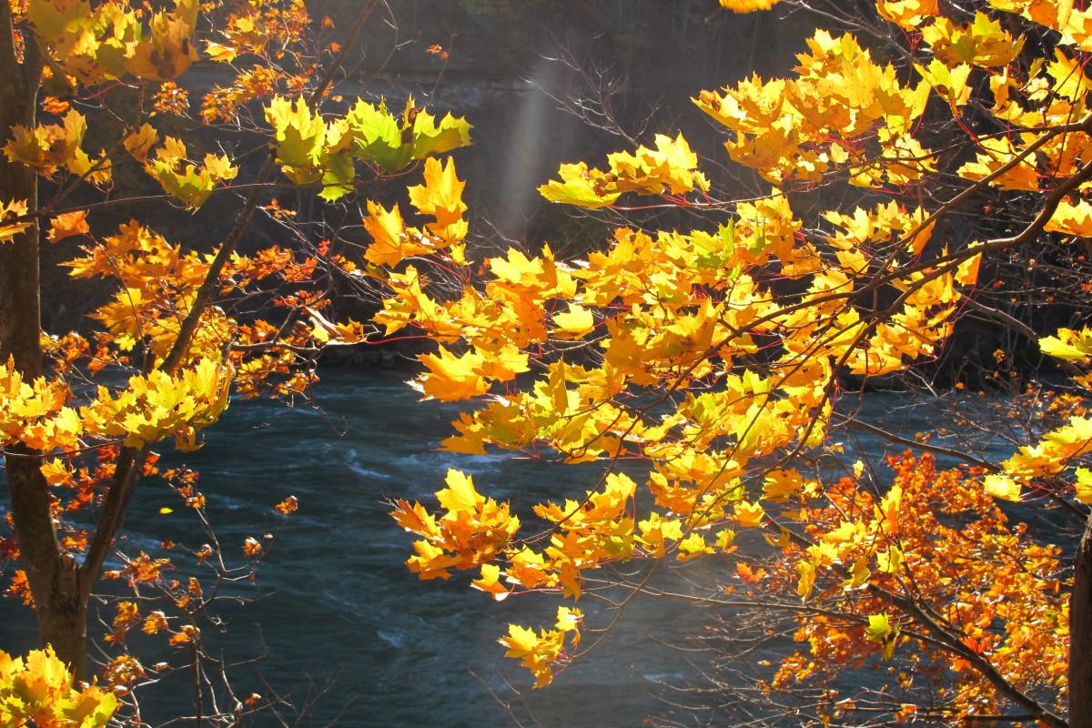 Fall Wallpapes รูปภาพ ธรรมชาติ ป่า กลางแจ้ง สาขา ปลูก แสงแดด