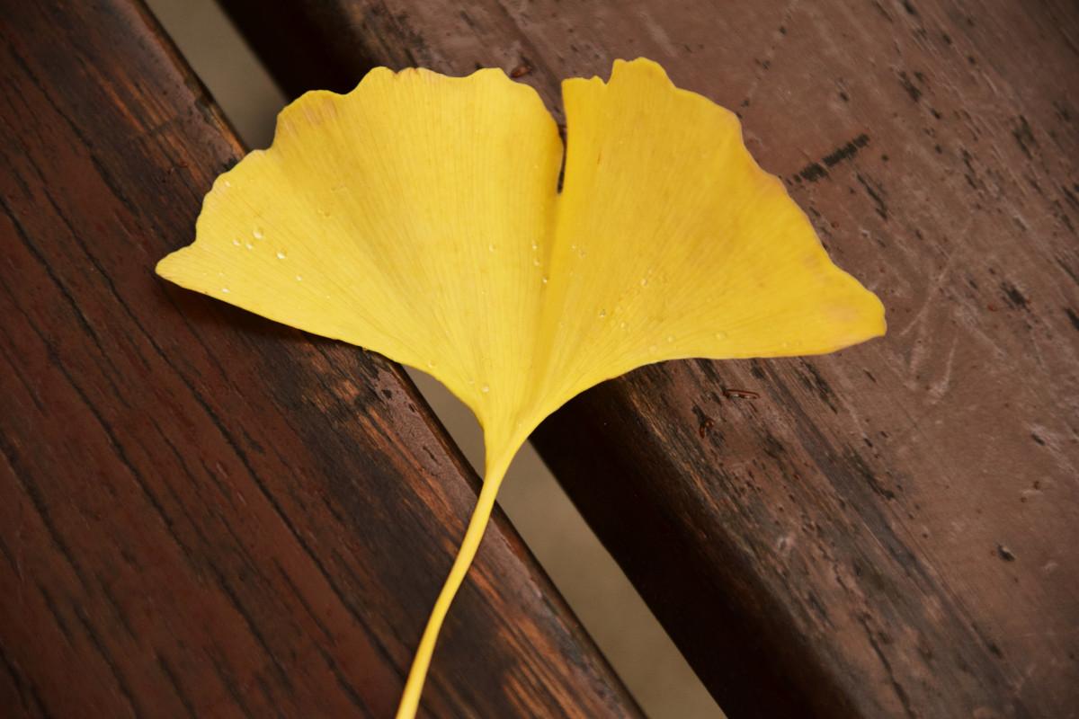 Free Images  flower petal green color autumn flora