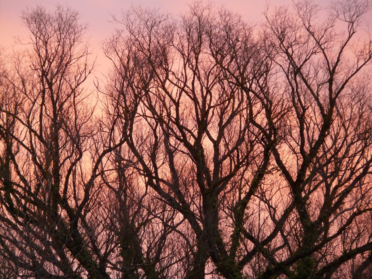 Free Images Tree Branch Winter Sunrise Sunset