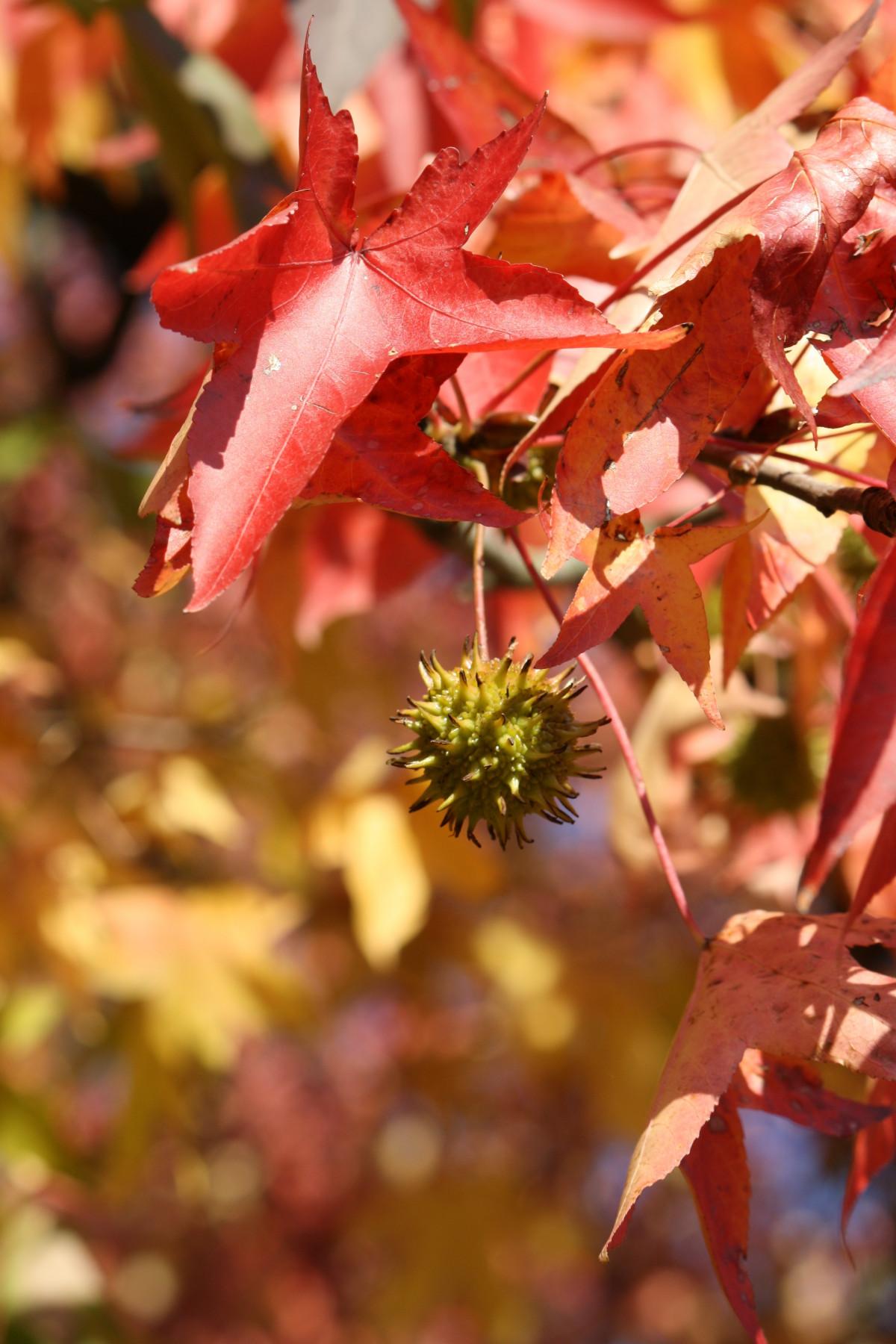 Images Gratuites  arbre la nature feuille fleur Orange printemps lautomne botanique