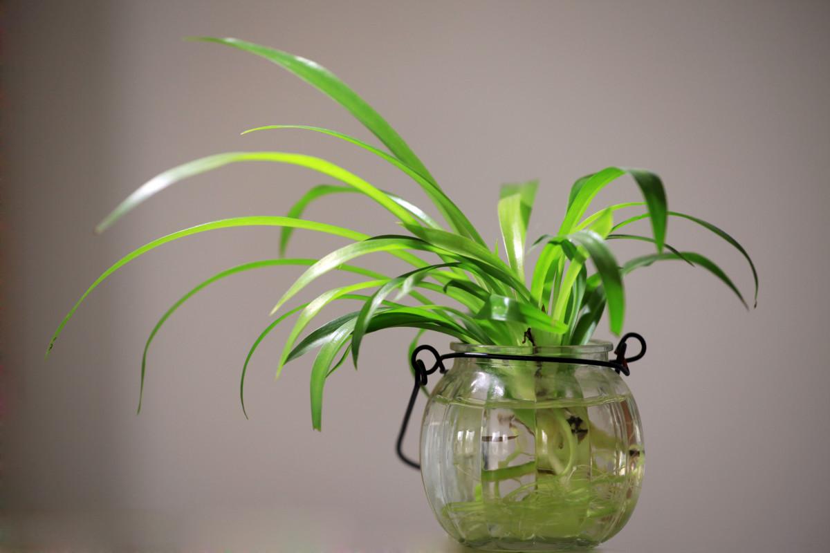 Free Images Plant Flower Green Desktop Indoor