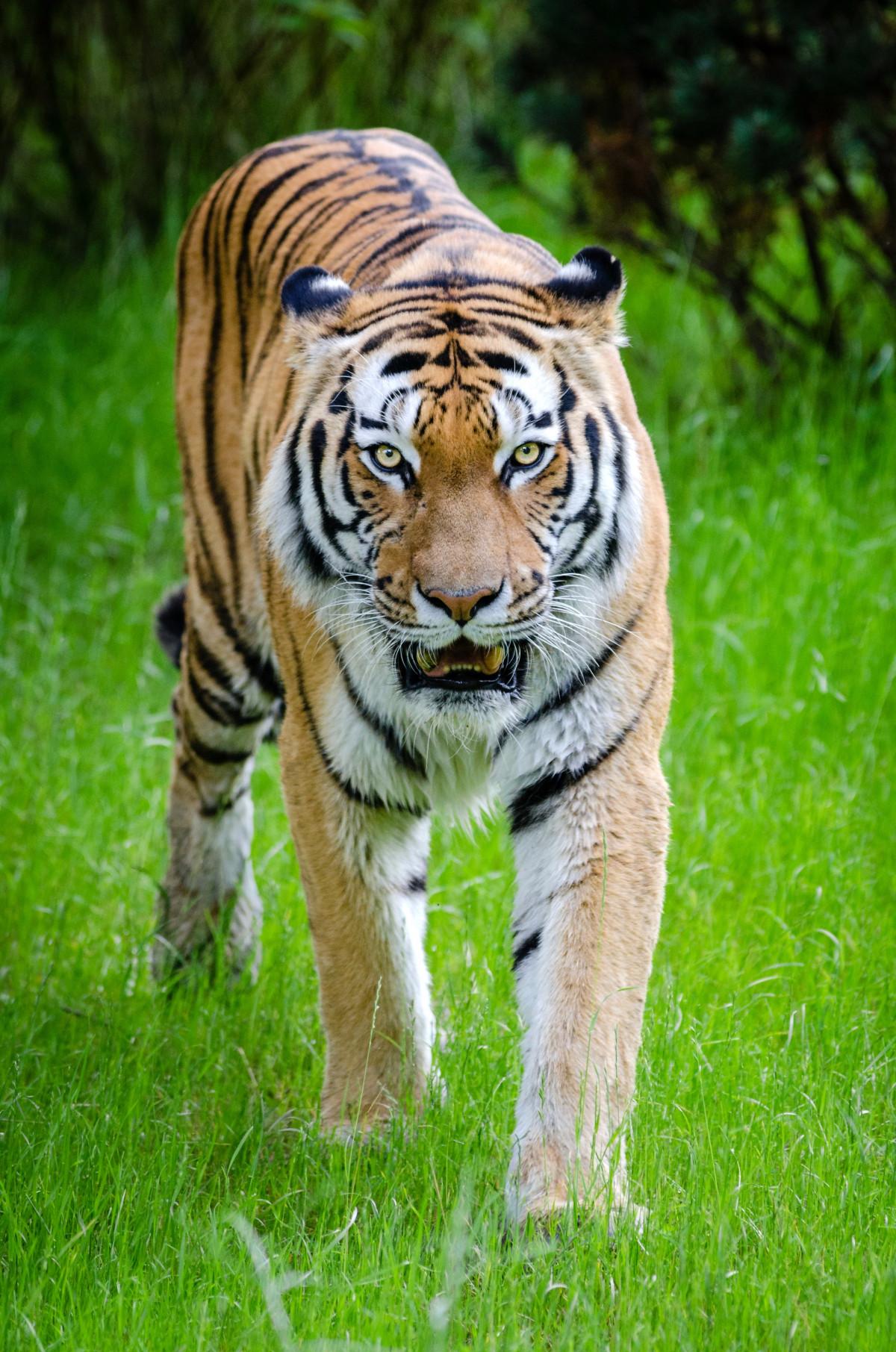 Gambar  putih hewan margasatwa kebun binatang bulu
