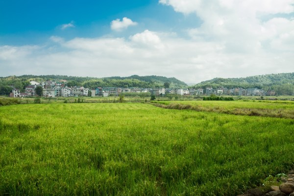 free landscape grass