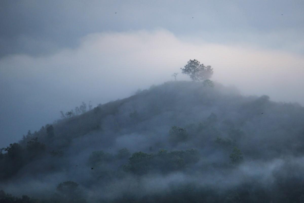 Gambar  pemandangan hutan gunung awan kabut sinar