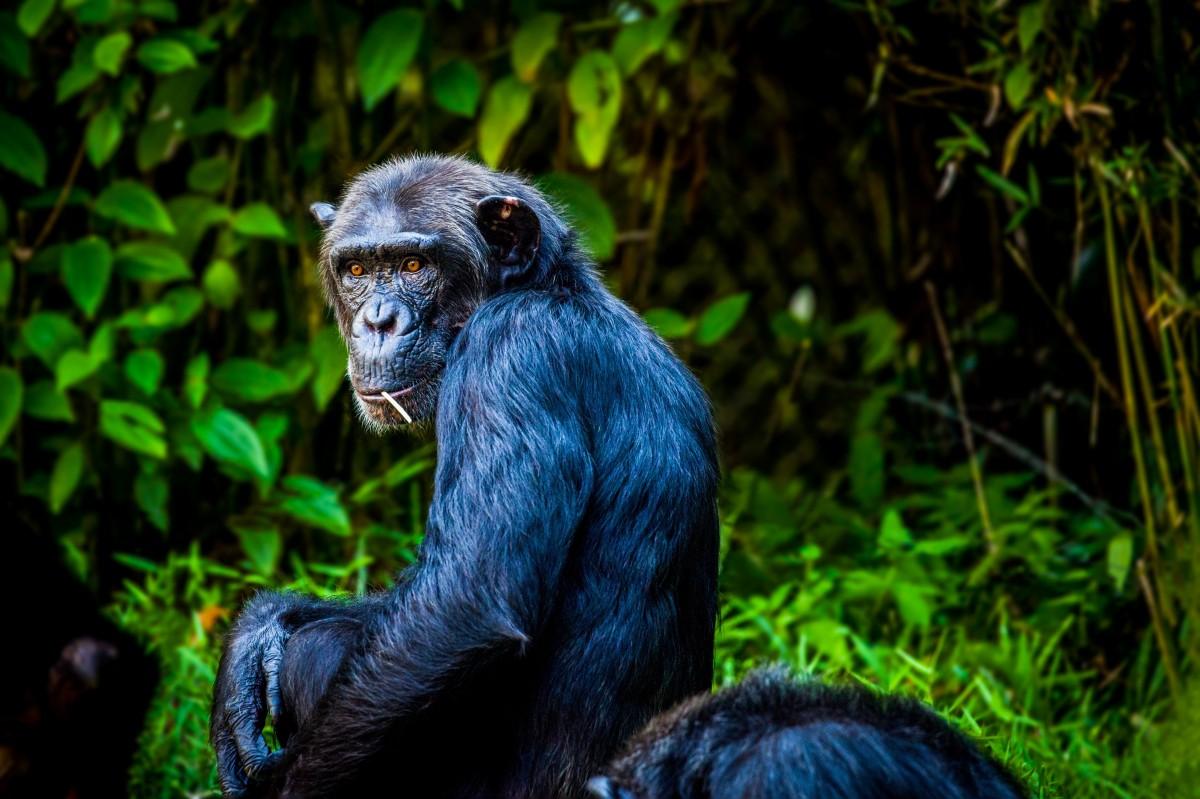 Gambar  alam hewan margasatwa kebun binatang binatang