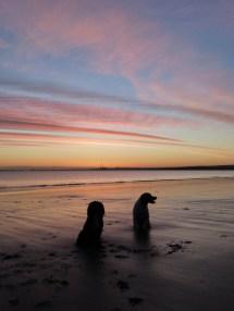 Free Beach Sea Ocean Horizon Sunrise Sunset