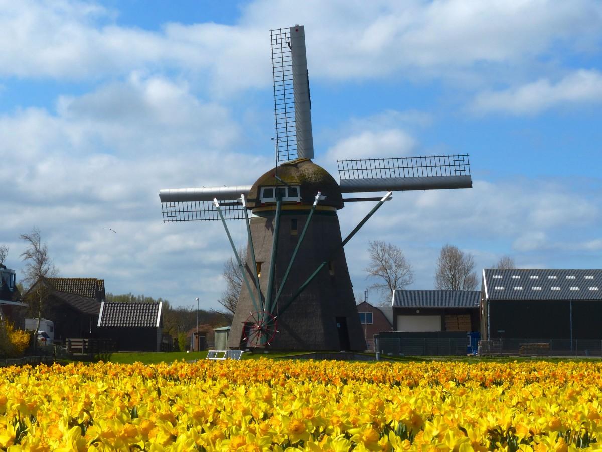 Kostenlose foto  Feld Bauernhof Blume Windmhle Wind