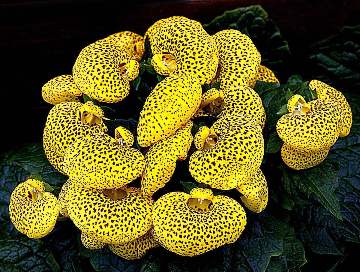 Gambar  menanam daun bunga biologi reptil kuning