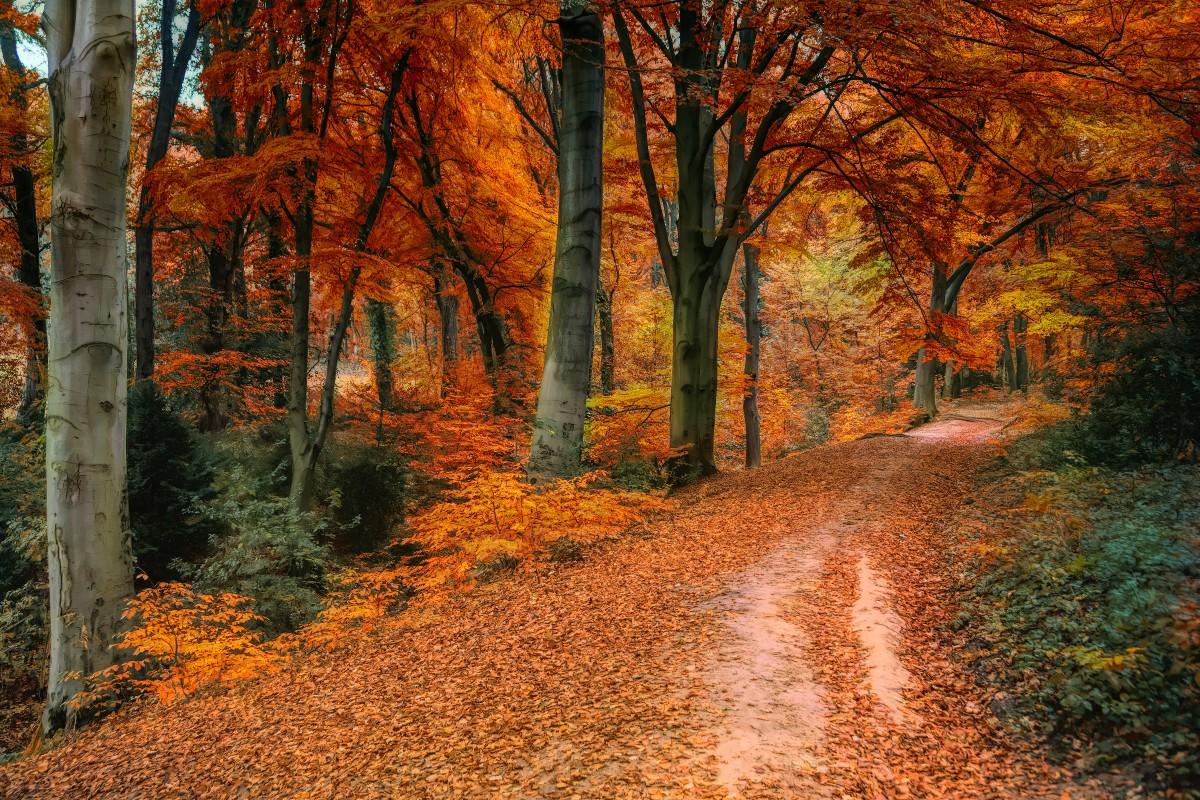 Fall Leaves Pictures Wallpaper Fotos Gratis 4k Fondos De Pantalla Colores De Oto 241 O