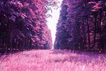 forest purple stocksy williams surreal france