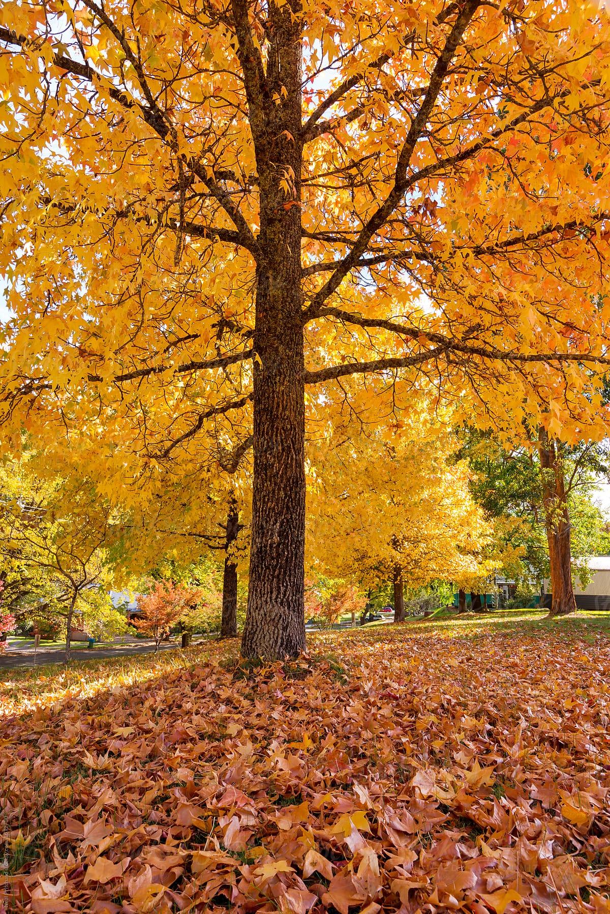 stock photo autumn coloured