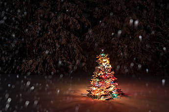 Images Of Snow Falling Wallpaper Christmas Tree Stocksy United