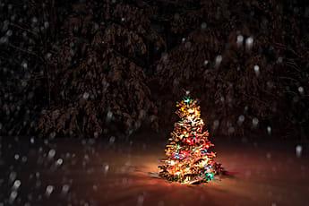 Snow Falling Video Wallpaper Christmas Tree Stocksy United