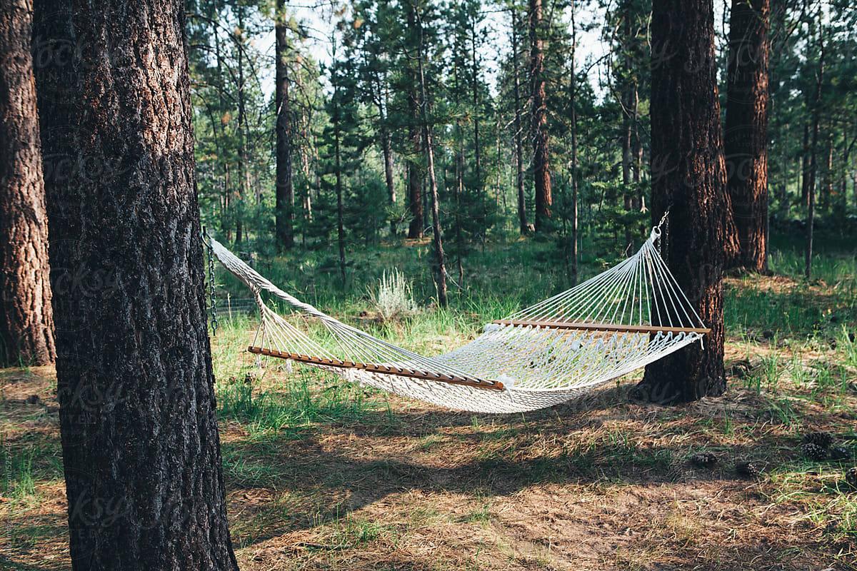 hammock hanging between two