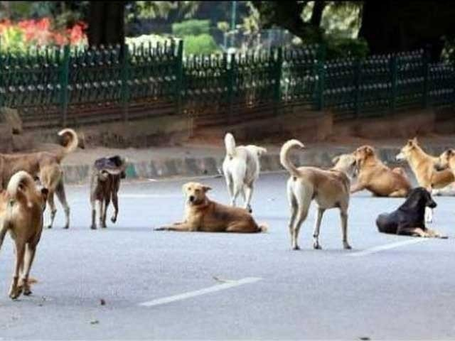 indian stray street dogs kill 6 year old boy in bihar