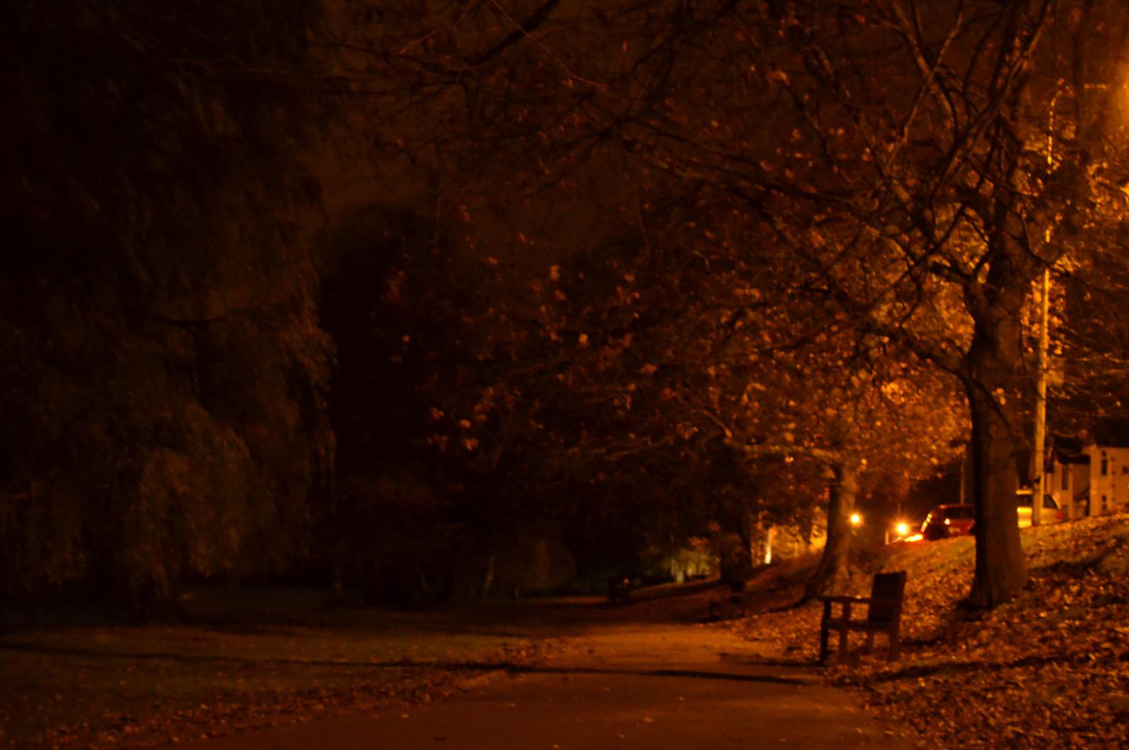 Fall Forest Hd Wallpaper Wallpaper Sunlight Trees Forest Leaves Dark Night