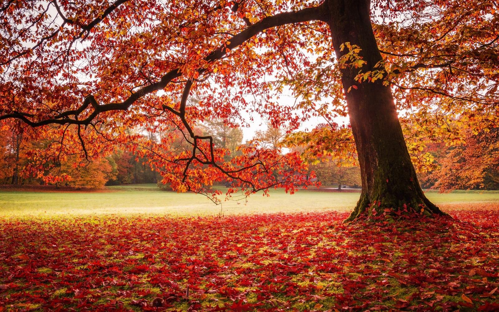Fall Season Desktop Wallpaper Wallpaper Sunlight Trees Landscape Fall Leaves