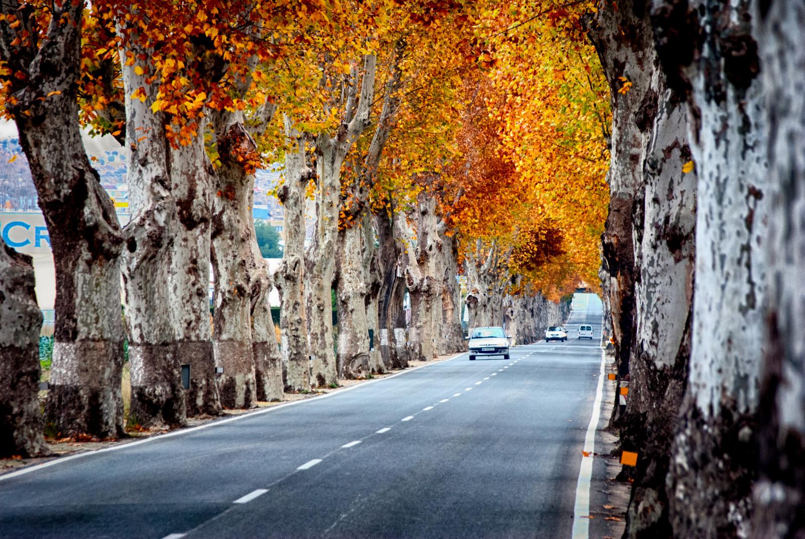 Fall Season Wallpapers Hd Wallpaper Sunlight Trees Landscape Colorful Fall
