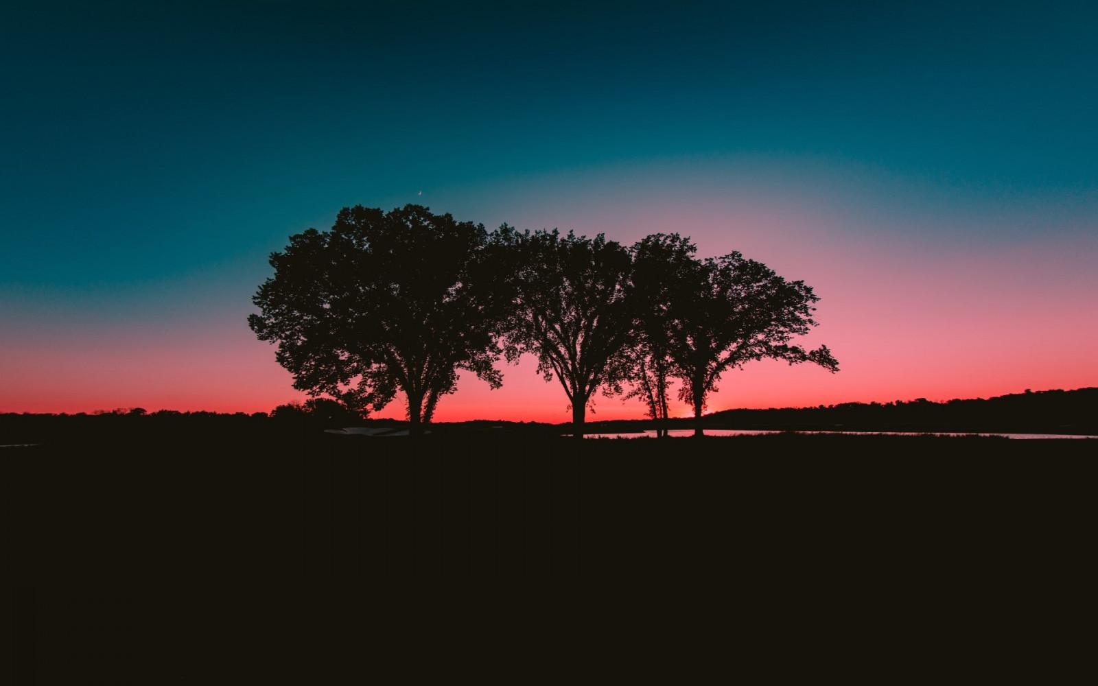 Wallpaper  gelap pemandangan langit pohon sinar