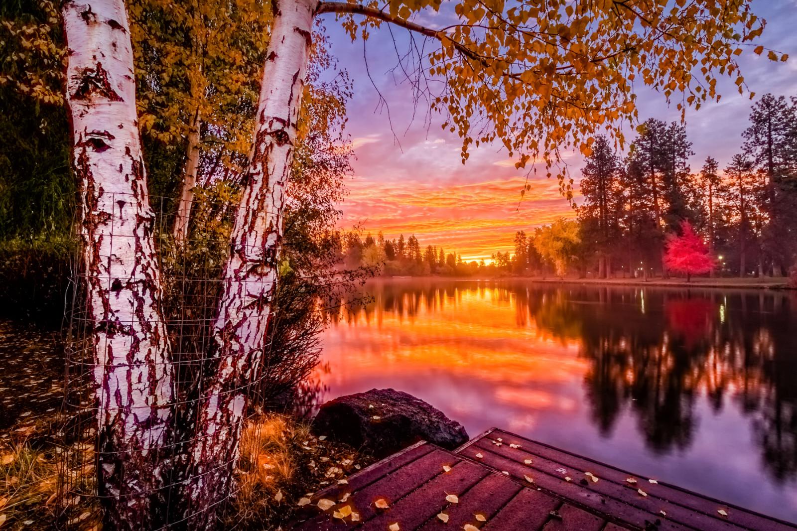 Portland Or Fall Had Wallpaper Wallpaper Sunlight Trees Landscape Forest Fall