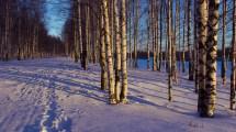 Wallpaper Sunlight Trees Landscape Contrast Forest