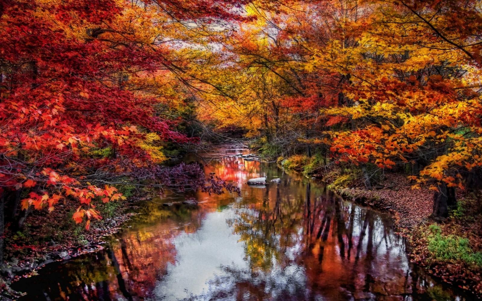 Fond dcran  des arbres paysage Color tomber