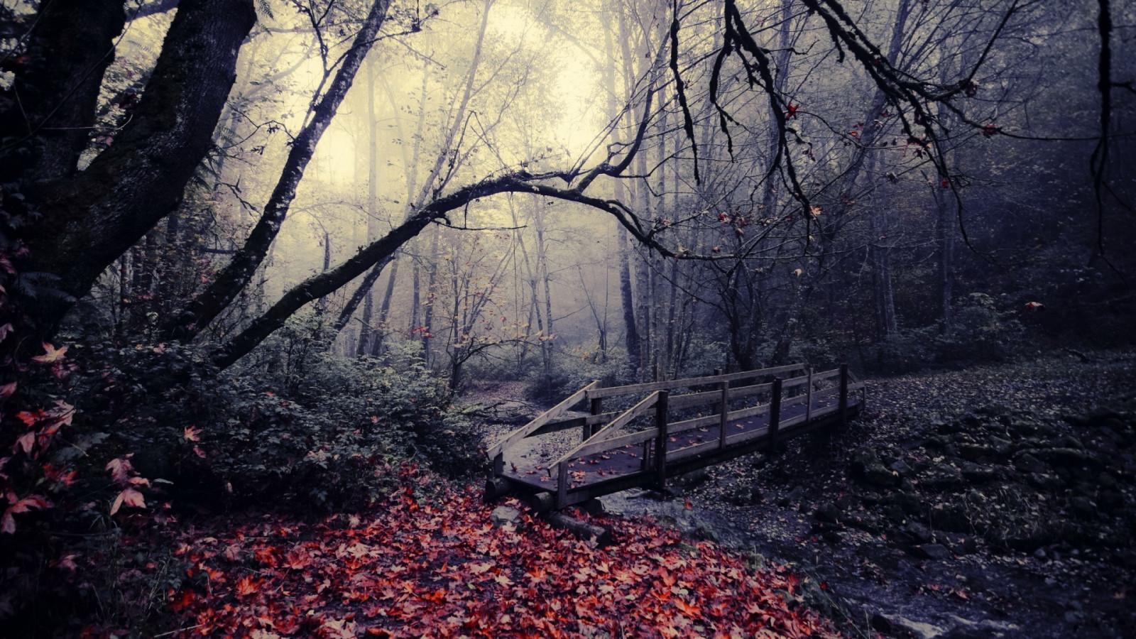 Gloomy Fall Wallpaper Hintergrundbilder Sonnenlicht Landschaft Wald Natur