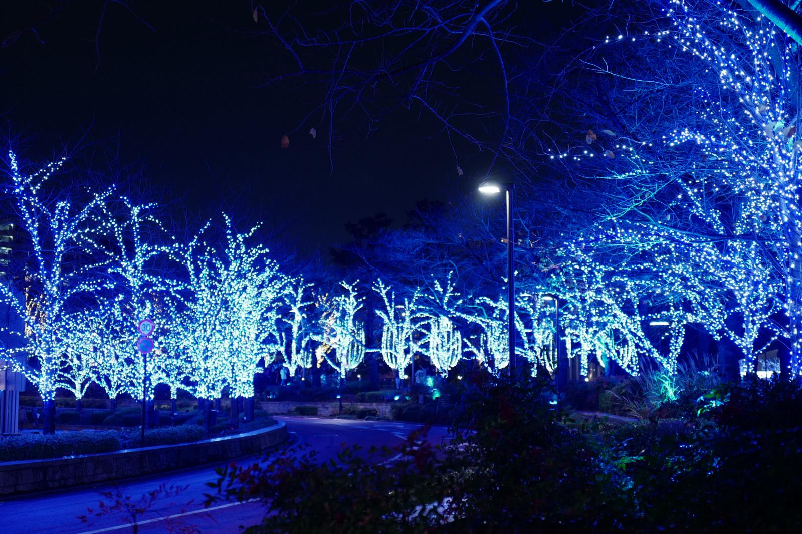 Fondos de pantalla  Japn noche luces de Navidad Leica